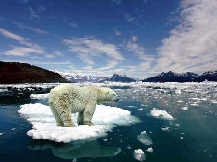 csm_melting-ice-polar-bear-on-2063111_16391916d7