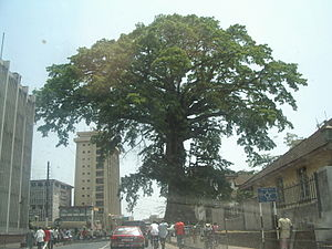 300px-Cotton_Tree_(Sierra_Leone)