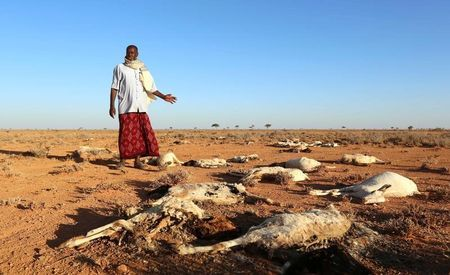 An internally displaced man looks at the carcasses of his goats and sheep in the outskirts