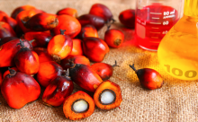 Sierra Leone palm oil venture and other agricultural produce gaining momentum
