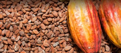 Cocoa-Beans-and-Fruit-75015111-1442x630