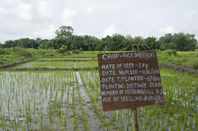 Initiative on Soaring Food Prices (ISFP) in Sierra Leone