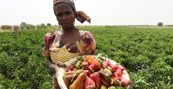 csm_NIGERIA-AFP-_FOOD_40c494fa16