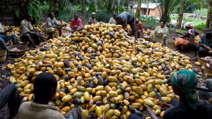 Ghana-marks-Cocoa-Day-today.jpg