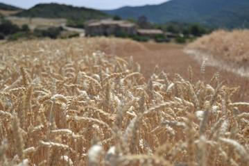 Harmony sustainable wheat program