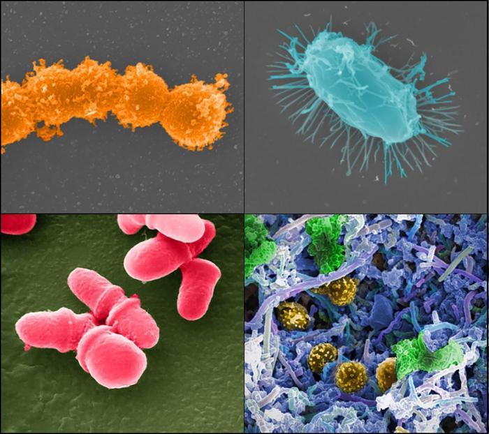 20180926-microbiome